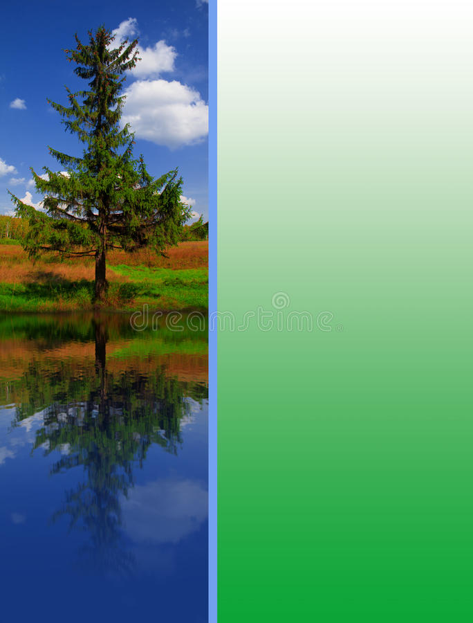 Download Green spruce stock illustration. Image of cloudscape - 14385938