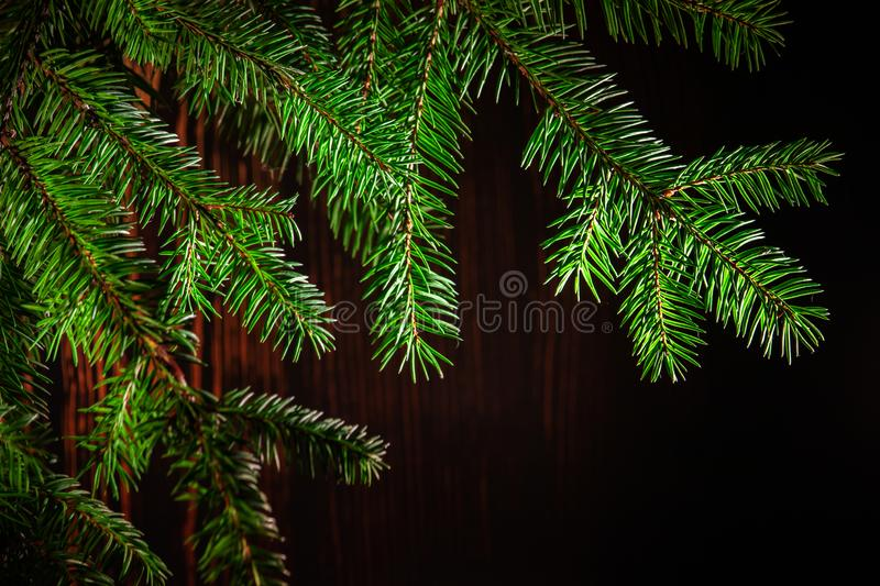 Green spruce branch stock images