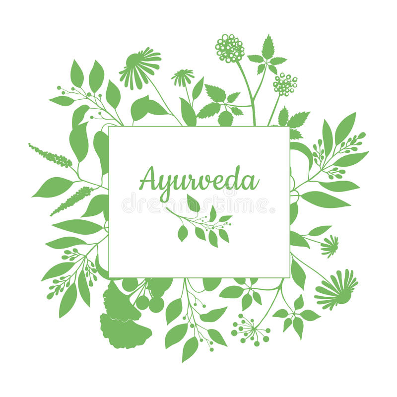 Green square frame with collection of ayurveda plants. Silhouette of branches on white background stock illustration