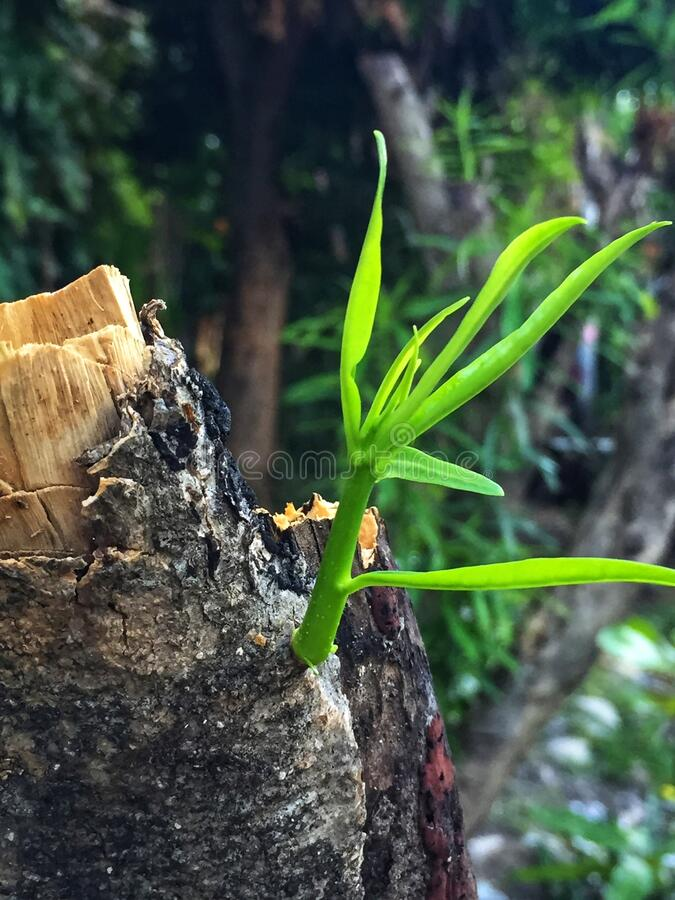 Green stem and leaf sprout royalty free stock photography