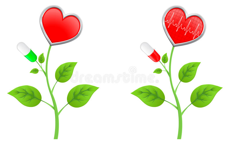 Green stem with leaves with a red heart vector illustration