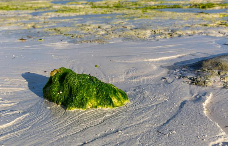 Green stone on ocean shore after low tide stock images