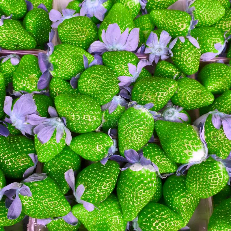 Green strawberries art royalty free stock photography