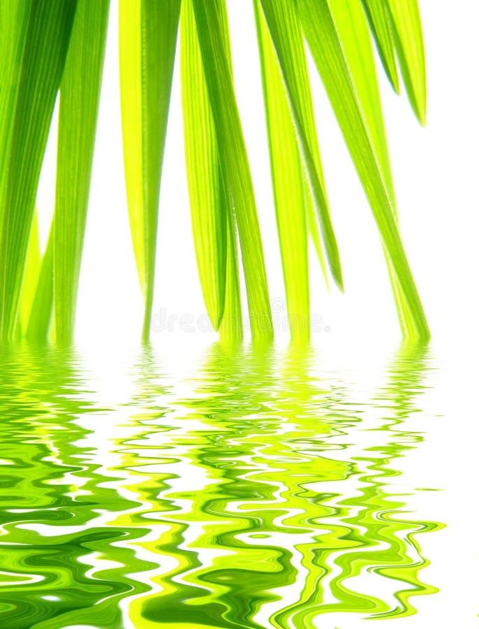 Green straws stock photo
