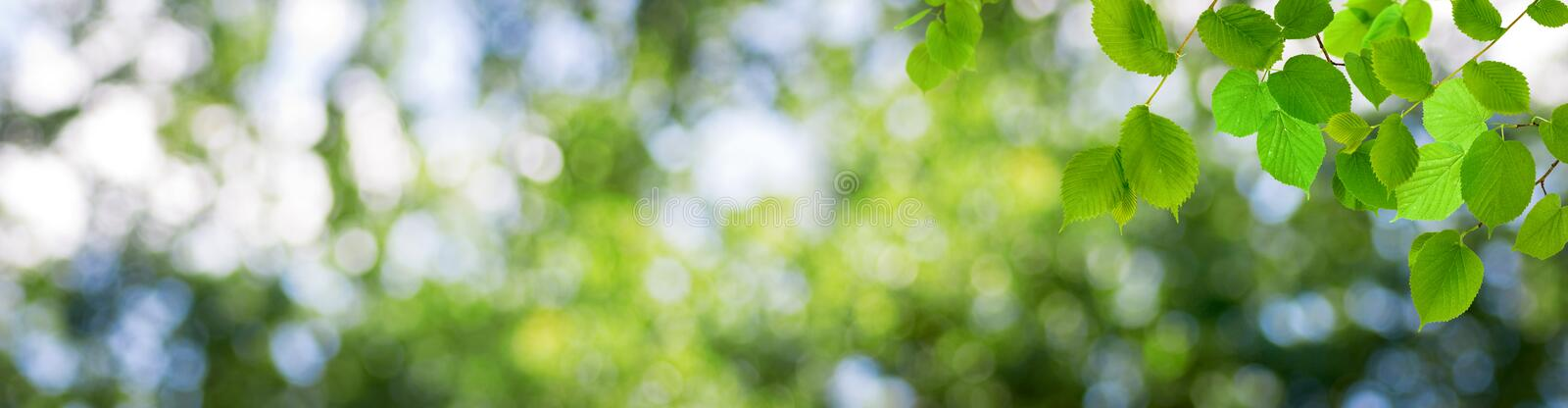 Green stylized balls on a beautiful abstract blurred natural background. Image of green stylized balls on a beautiful abstract blurred natural background.3d royalty free stock photos