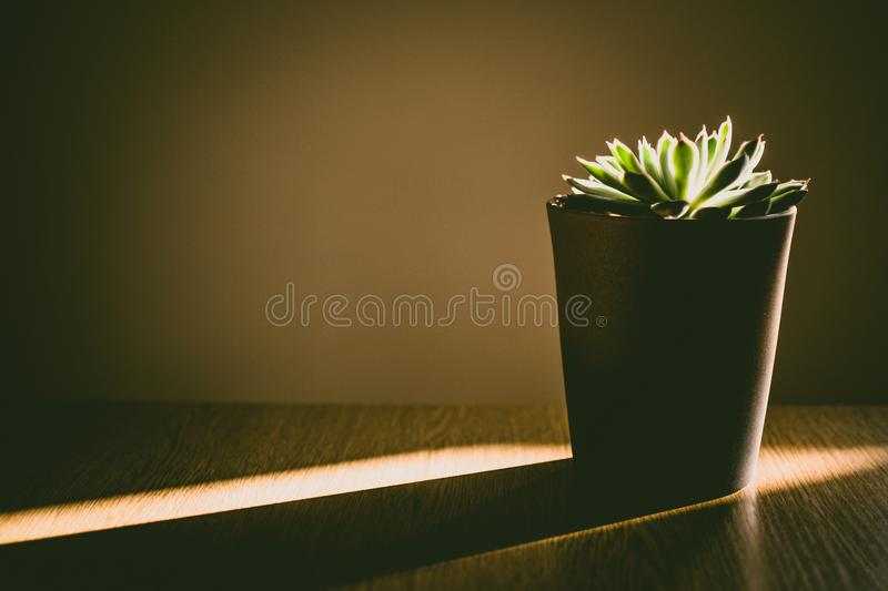 Green Succulent Plant stock images