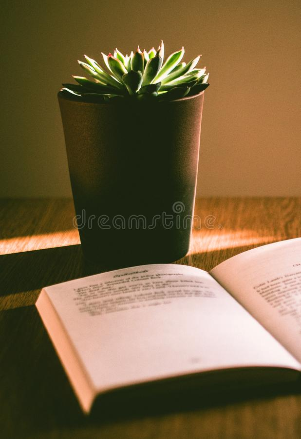 Green Succulent Plant With Brown Pot stock photos
