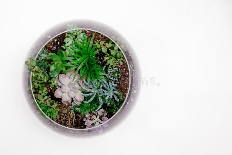 Green Succulent Plant in Terrarium stock photo