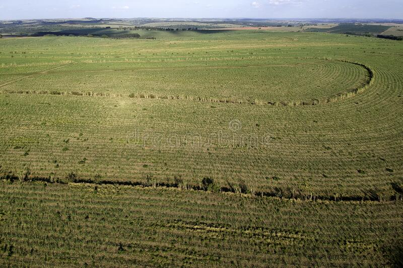 Green sugar cane field on Sao Paulo state, Brazil. Green sugar cane field located on Sao Paulo state, Brazil stock images