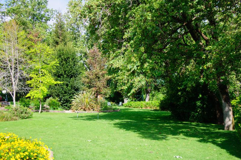 Green summer backyard garden with grass after rain and the sun. Shining royalty free stock photo