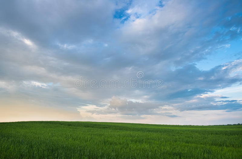 Green summer field. With nice cloudscape before sunset royalty free stock image