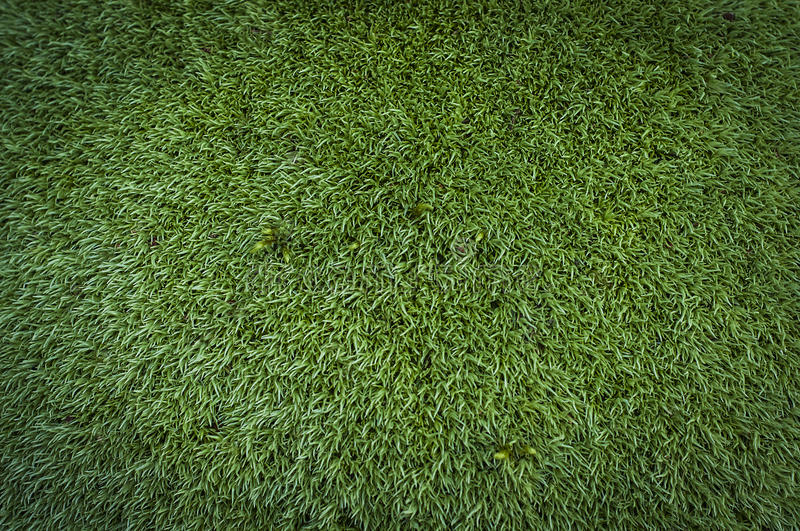 Green summer forest moss texture background stock images
