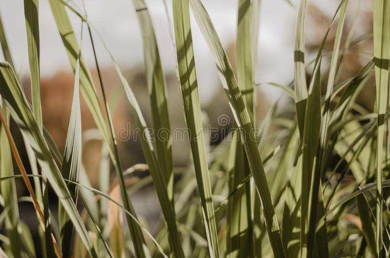 Green summer grass in macro. In the autumn park royalty free stock photography