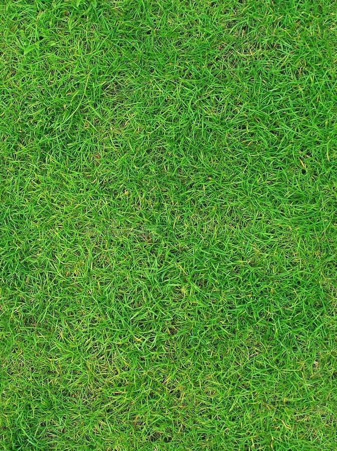 Green summer grass texture stock image