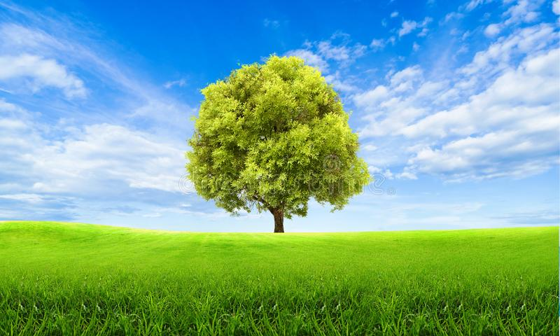 Green summer landscape scenic view wallpaper. Solitary tree on grassy hill and blue sky with clouds. Lonely tree springtime. Green summer landscape scenic view stock images