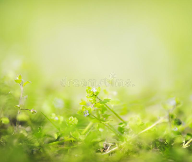 Green summer or springtime nature background with wild plants and little flowers, Soft focus. Green summer or springtime nature background with wild plants and stock photography
