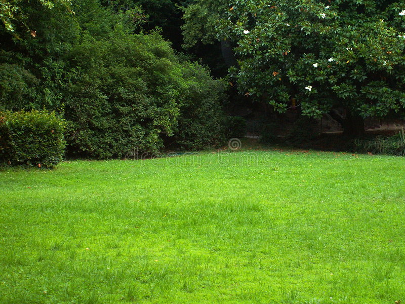 Green sunny glade. Green lawn lit by the summer sun. There are blossoming Magnolia tree on the background and several bushes stock photos
