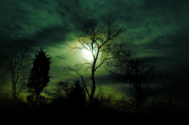 Green Sunset Tree silhouette. A green colored sky with a leafless tree silhouette stock image