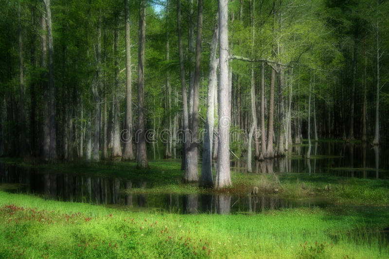 Green swamp royalty free stock image