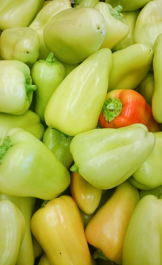 Green sweet mix bell peppers close up bulgarian pepper fresh, assorted colorful capsicum paprika stock photography