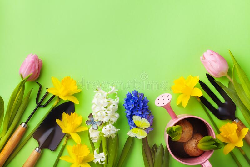 Green table with gardening tools, seedling of flowers and butterflies top view. Beautiful nature spring background stock images