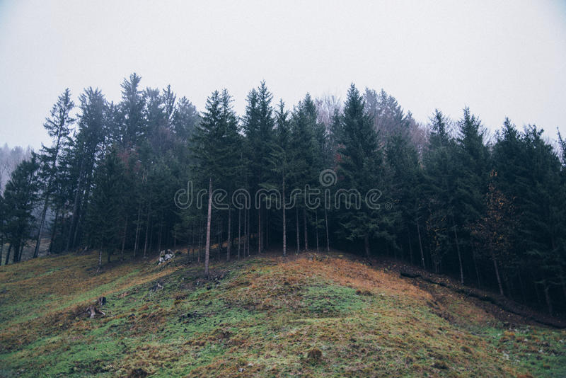 Green Tall Trees During Daytime Free Public Domain Cc0 Image