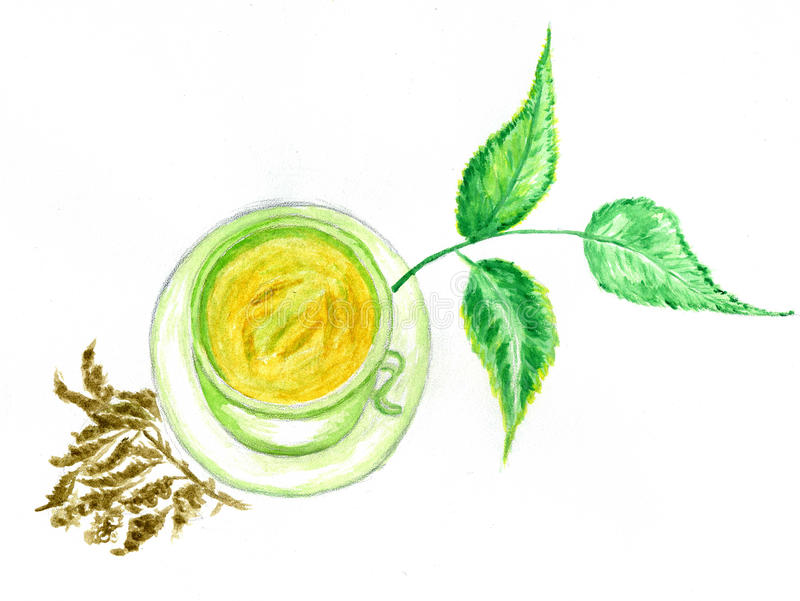 Green Tea Art. Cup of green tea with leaves hand drawn watercolor illustration royalty free illustration