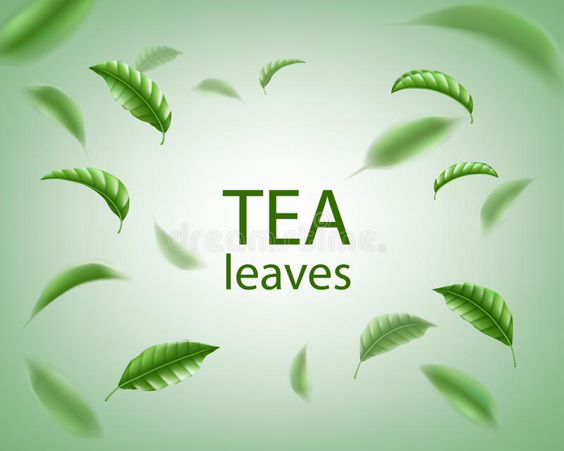Green tea background. Realistic tea leaves whirl in the air. Floral elements for design, advertising, packaging. Vector. Illustration EPS 10 royalty free illustration