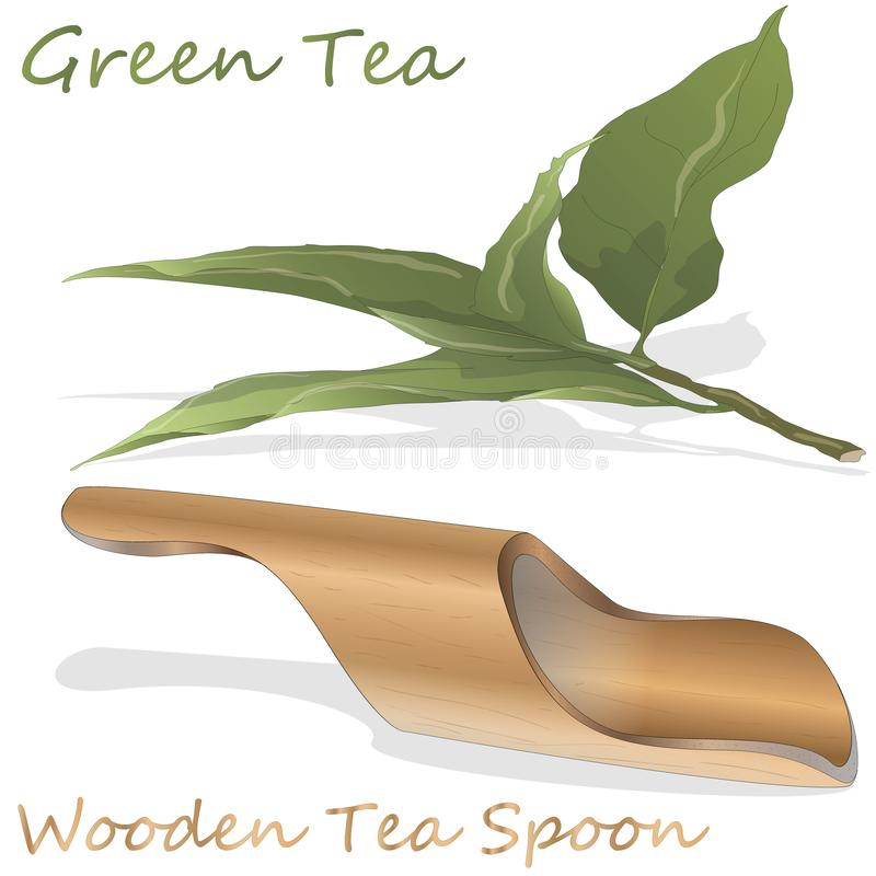 Green tea and bamboo wooden spoon on white isolated background. Vector illustration vector illustration