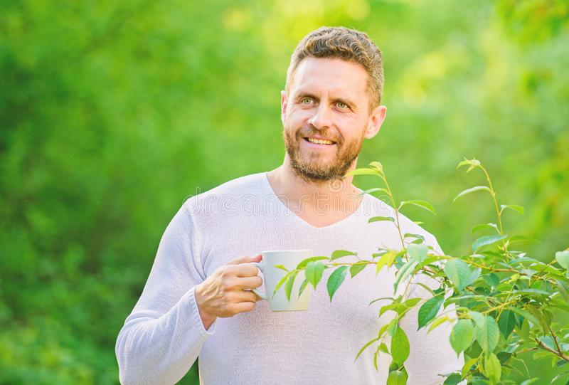 Green tea contains bioactive compounds that improve health. Natural drink. Healthy lifestyle. I prefer green tea. Refreshing drink. Man bearded tea farmer hold royalty free stock photo