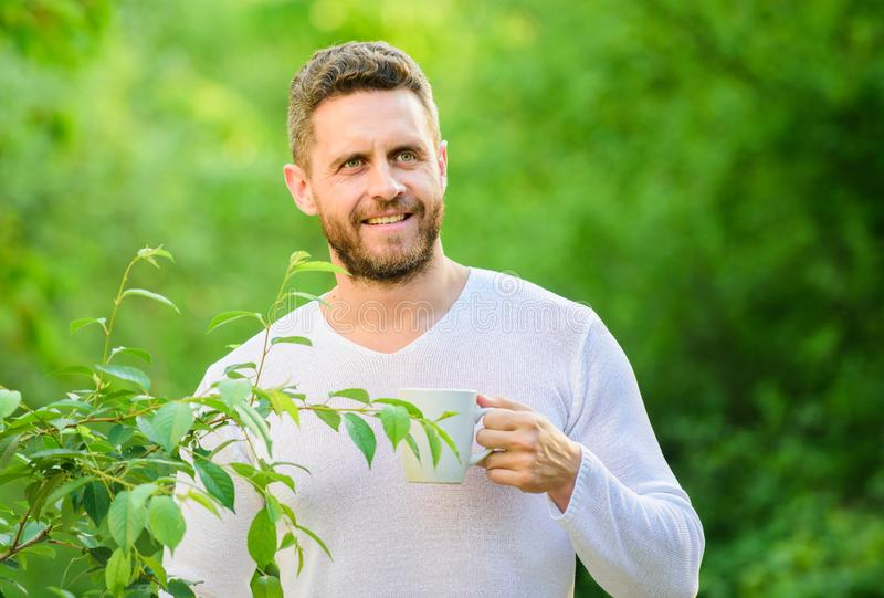 Green tea contains bioactive compounds that improve health. Natural drink. Healthy lifestyle. I prefer green tea. Refreshing drink. Man bearded tea farmer hold stock photography