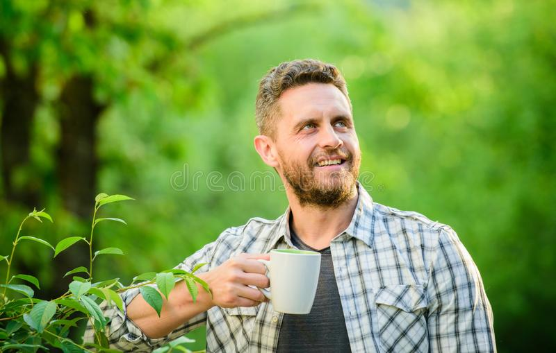 Green tea contains bioactive compounds that improve health. Whole leaf tea. Natural drink. Healthy lifestyle. I prefer. Green tea. Refreshing drink. Man bearded stock photography