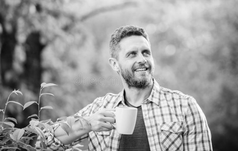 Green tea contains bioactive compounds that improve health. Whole leaf tea. Natural drink. Healthy lifestyle. I prefer. Green tea. Refreshing drink. Man bearded stock photo
