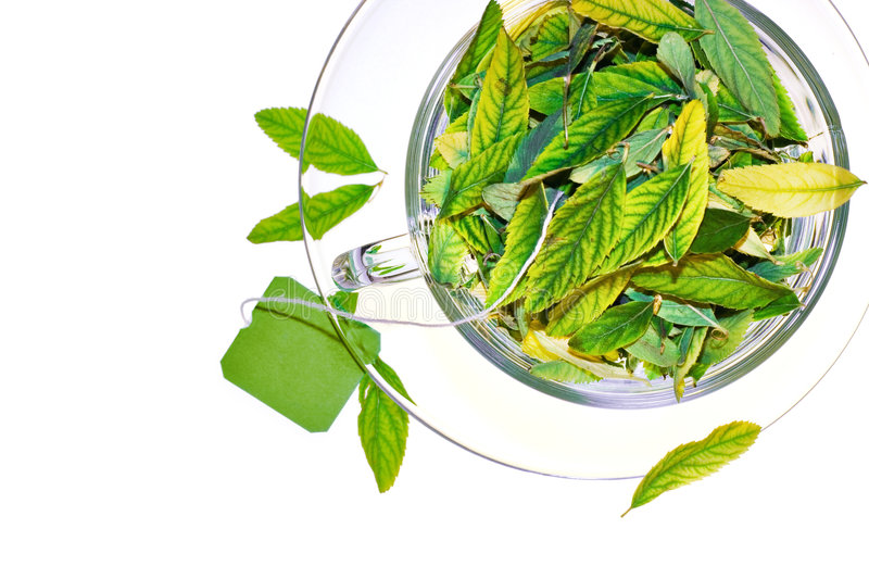 Download Green tea freshness stock photo. Image of healthy, floral - 8652184