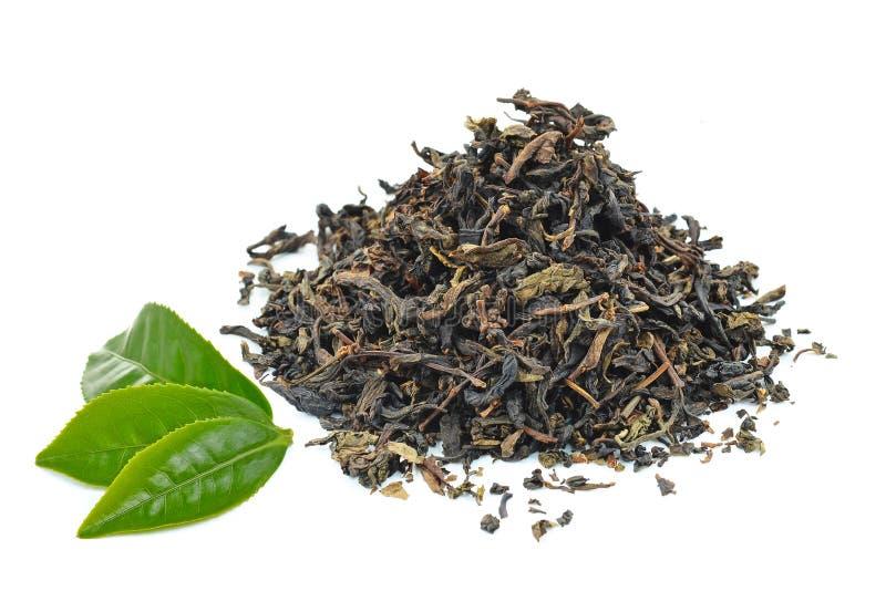 Green tea leaf stock photography