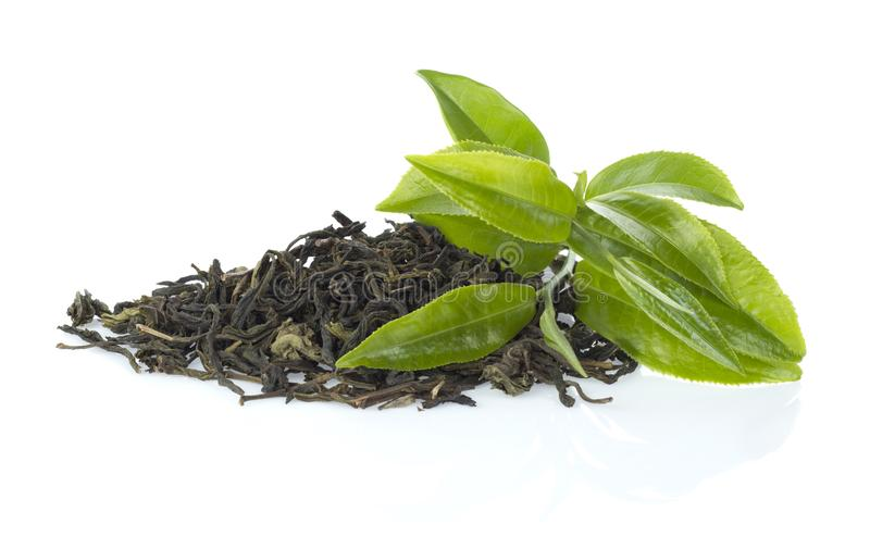 Green tea leaf stock photos