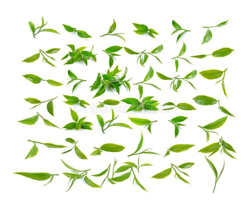 Green tea leaf isolated on white background. stock photo