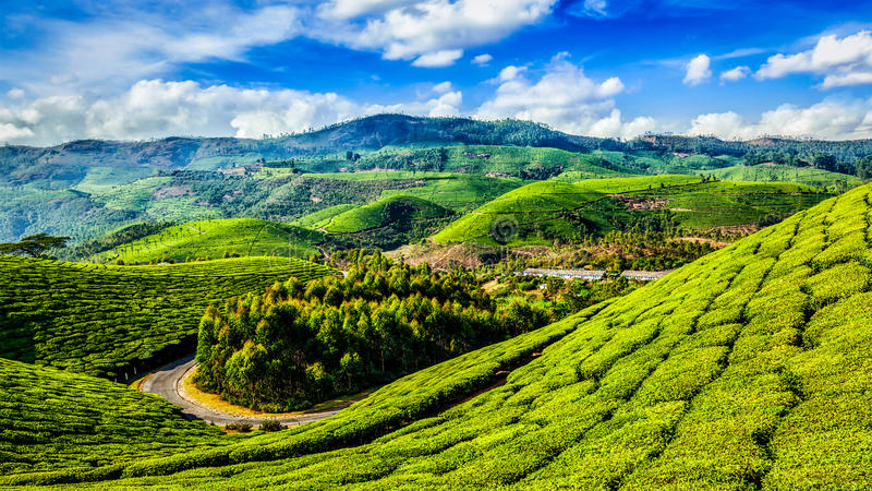 Green tea plantations in Munnar, Kerala, India. Kerala India travel background - panorama of green tea plantations in Munnar, Kerala, India - tourist attraction royalty free stock photo