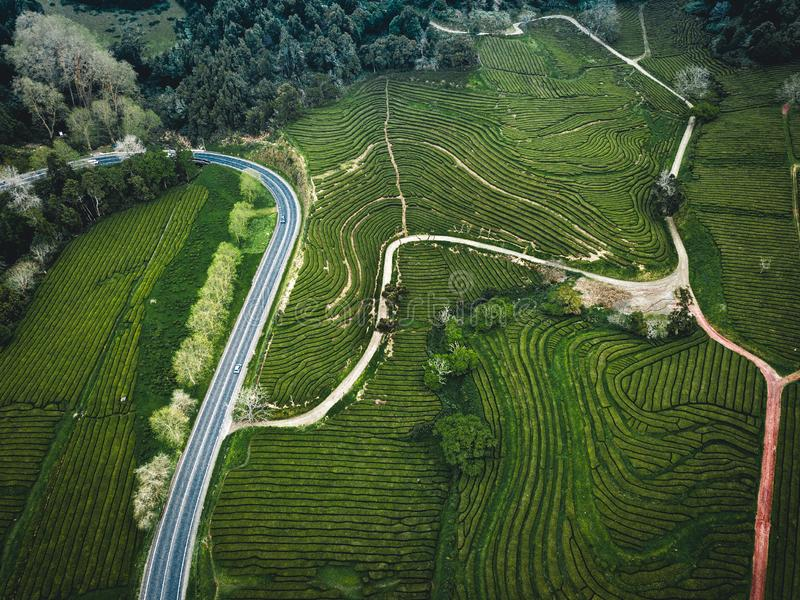 Green tea terrace plantation Gorreana in fog from above, drone shot, Azores islands. The oldest, and currently only, tea stock images