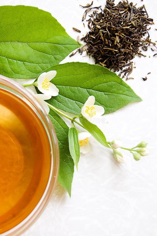 Free Green Tea With Jasmine Stock Photography - 14557552
