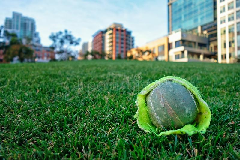 Dog saliva on a tennis ball in a city park near downtown San Diego. A green tennis ball on the green grass of a city park lawn in the heart of a city royalty free stock photo