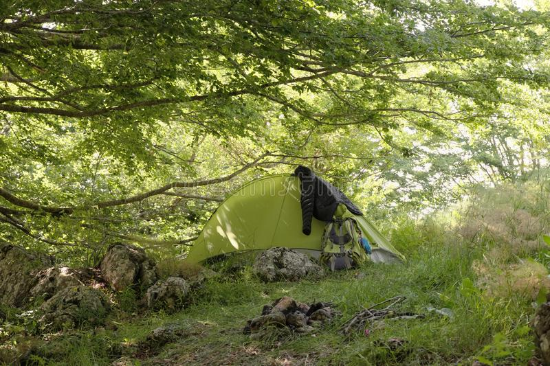 Green tent with basic trekking gear under branches of beeches in woods royalty free stock photos