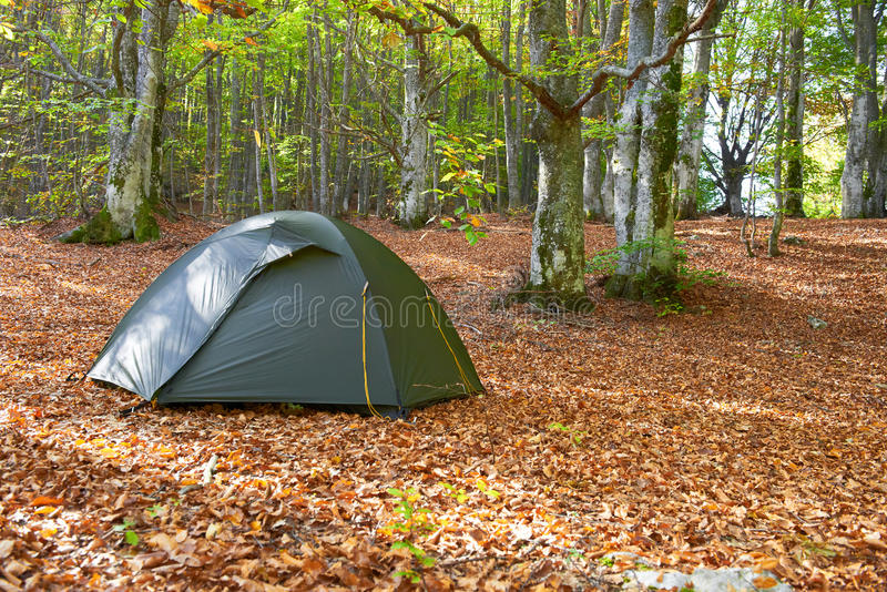 Green Tent In The Forest Royalty Free Stock Images