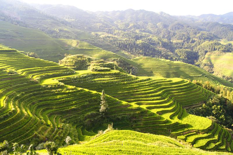 Green terraced fields, terrace along mountains with sunshine shinningn stock photos