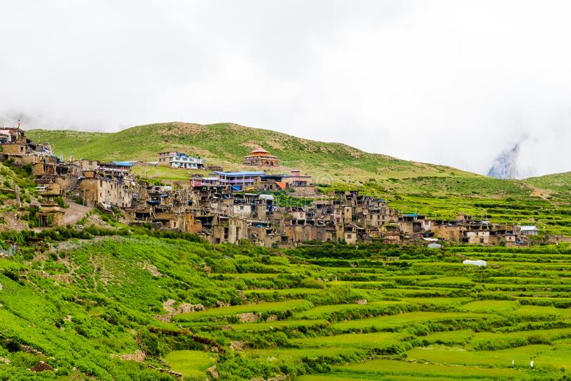 Green terraced fields and traditional architecture in Nar village, Annapurna Conservation Area, Nepal stock image