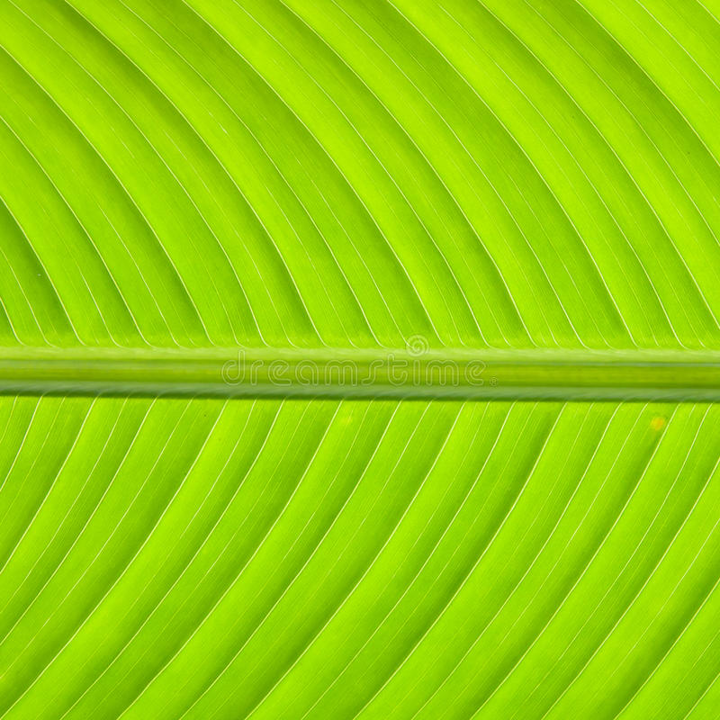 Download Green texture stock photo. Image of banana, photo, grass - 22569252
