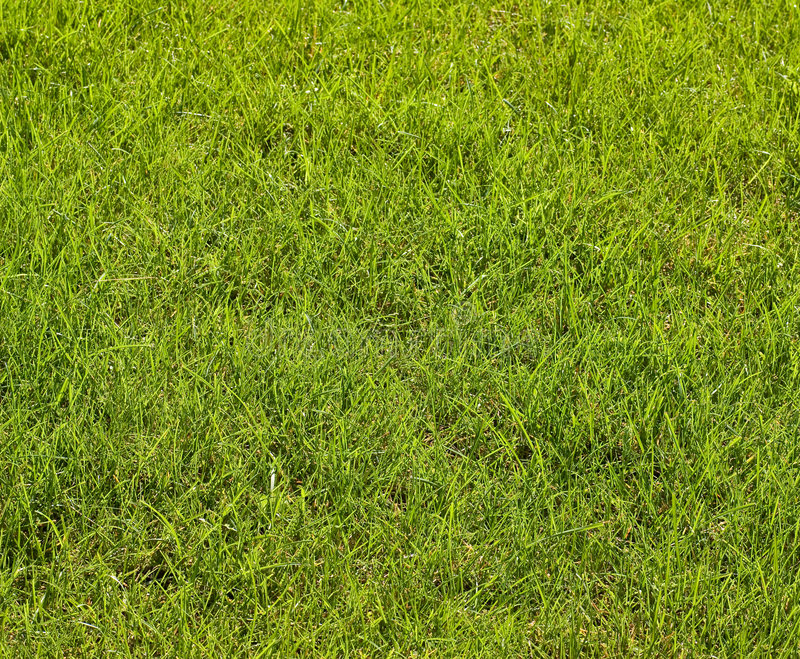 Green texture. Fresh grass with dew drops , wide-angle view, in the sun stock photos
