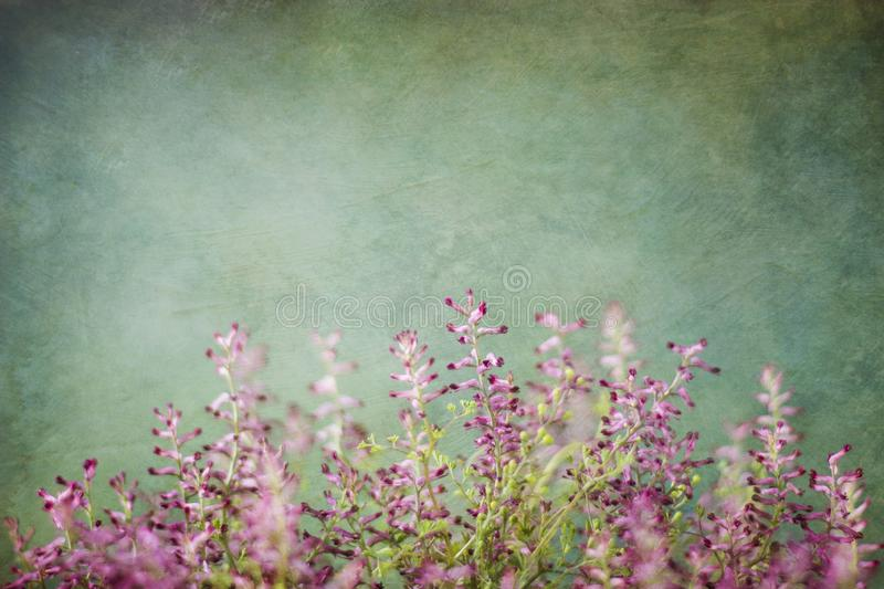 Green background and purple weeds stock photo