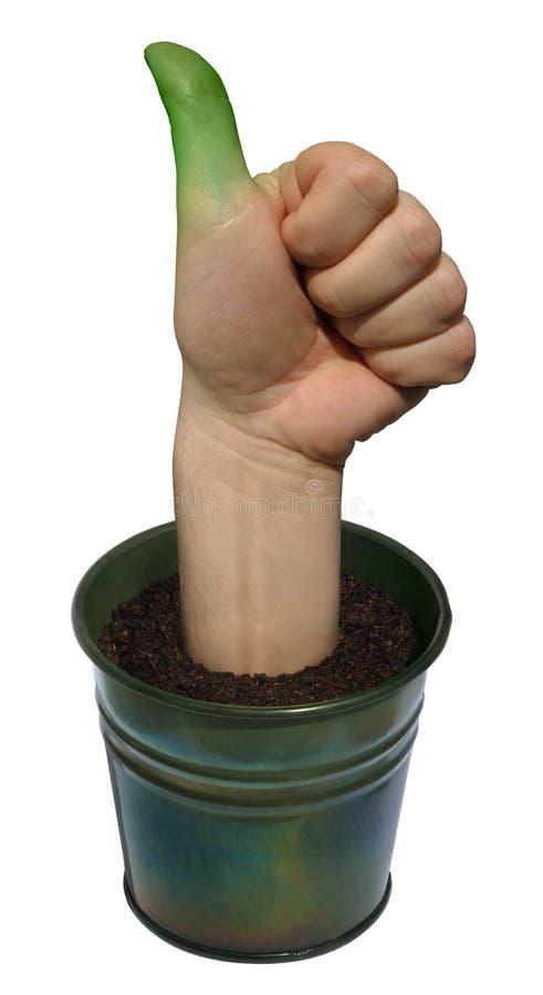 Download Green thumb stock photo. Image of earth, concept, season - 2247936