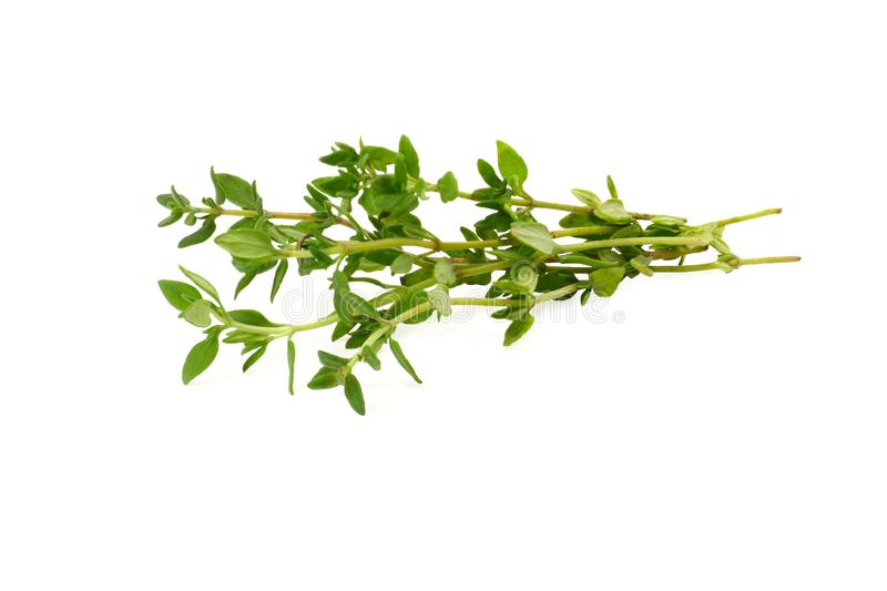 Green thyme bunch isolated on white background royalty free stock images